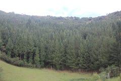 Ein Wald in den ekuadorianischen Anden Stockfoto