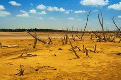 Ein Wald der toten Bäume stockbilder