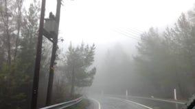 Ein Wald in einem Nebel stock video