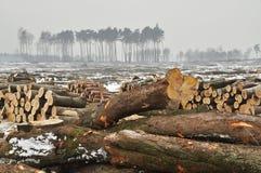 Ein Wald geverringert Stockbild
