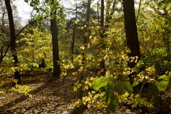 Ein Wald im Fall Onario stockfoto