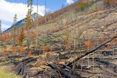 Ein Wald nach einem verwüstenden Feuer in Nord-Kanada Lizenzfreie Stockbilder