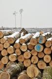 Ein Wald verringerte Lizenzfreie Stockbilder
