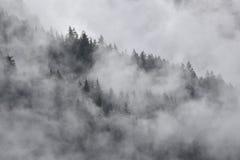 Ein Wald versteckt in den Wolken stockfoto