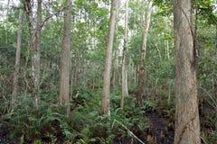 Ein Wald von Bäumen stockfoto