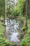 Ein Waldruhiger See, in den ein Strom fließt, wird durch a blockiert Lizenzfreie Stockfotos