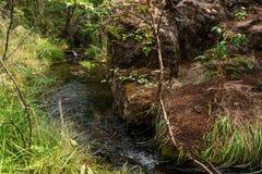 Ein Waldstrom, der in den Berg Altai fließt Lizenzfreie Stockfotos