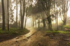 Ein Waldweg stockfotografie