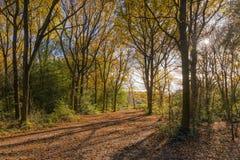 Ein Waldweg Lizenzfreie Stockfotos
