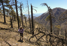 Ein Wanderer macht ihre Weise durch Forest Fire Devastation Stockbilder
