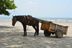 Ein Warenkorb und ein Pferd Stockfotografie
