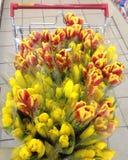 Ein Warenkorb von Tulpen Lizenzfreies Stockbild
