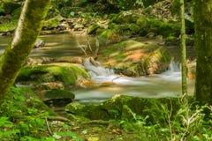 Ein Wasserfall gestaltet durch Bäume lizenzfreie stockbilder