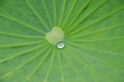 Ein Wassertropfen auf dem Lotosblatt Lizenzfreies Stockfoto