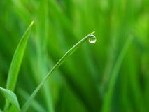 Ein Wassertropfen auf dem Tipp des Grases Lizenzfreie Stockbilder