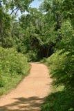 Ein Weg in das Holz an einem Sommertag Stockbild