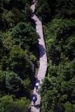 Ein Weg in den Bäumen stockfotografie