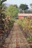 Ein Weg in den Weinbergen Lizenzfreie Stockfotos