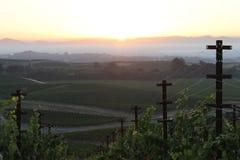 Ein Weg in den Weinbergen Lizenzfreie Stockbilder
