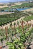 Ein Weg in den Weinbergen Lizenzfreies Stockfoto