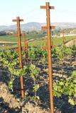 Ein Weg in den Weinbergen Stockfotos