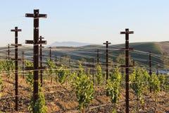 Ein Weg in den Weinbergen Stockbild