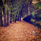 Ein Weg der Blätter des Herbstes Lizenzfreies Stockbild