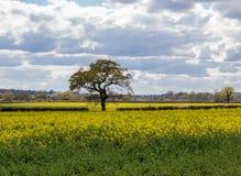 Ein Weg in der Essex-Landschaft Lizenzfreies Stockfoto