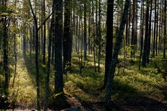 Ein Weg in der Natur lizenzfreie stockbilder