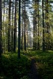 Ein Weg in der Natur stockfoto