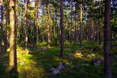 Ein Weg in der Natur lizenzfreies stockbild