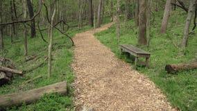Ein Weg durch das Holz Stockbild