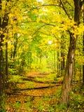 Ein Weg durch das Holz Lizenzfreies Stockfoto