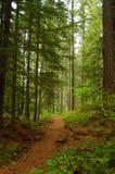 Ein Weg durch das Holz Stockbilder