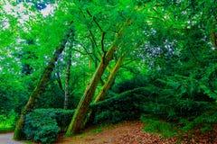 Ein Weg durch den großartigen, belaubten und grünen botanischen Garten von GijÃ-³ n ein August-Nachmittag im Jahre 2018 stockfoto