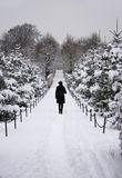 Ein Weg durch den schneebedeckten Wald Lizenzfreies Stockbild