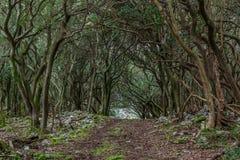 Ein Weg durch den verzauberten Wald auf der ` veliki Brijun-` Insel Lizenzfreie Stockbilder