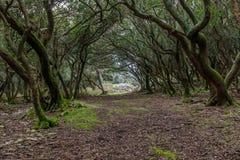 Ein Weg durch den verzauberten Wald auf der ` veliki Brijun-` Insel Stockfoto