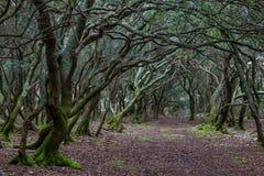 Ein Weg durch den verzauberten Wald auf der ` veliki Brijun-` Insel Lizenzfreie Stockfotos