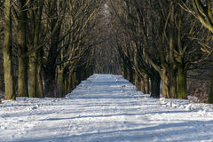 Ein Weg durch Winter Stockfoto