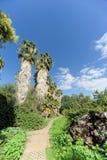 Ein Weg in einem Park mit Palmen Lizenzfreies Stockfoto