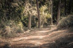 Ein Weg in einem Wald stockbild