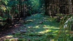 Ein Weg führt aufwärts zwischen den Bäumen eines Waldes, der in den Schweizer Jura-Bergen gelegen ist Stockbild