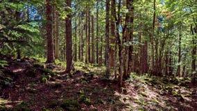 Ein Weg führt aufwärts zwischen den Bäumen eines Waldes, der in den Schweizer Jura-Bergen gelegen ist Stockfotos