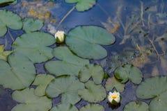 Ein Weg im botanischen Garten Lizenzfreie Stockfotografie