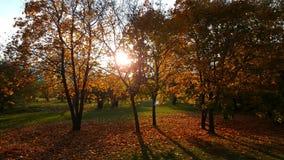 Ein Weg im Herbst forrest lizenzfreie stockfotos