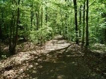 Ein Weg im Holz Stockfotos