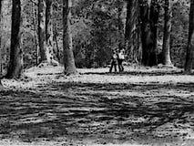 Ein Weg im Holz Lizenzfreies Stockfoto
