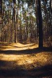 Ein Weg im Holz Lizenzfreies Stockbild