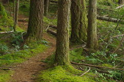 Ein Weg im Holz Stockbilder